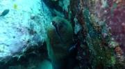 Seychellen, Tauchen auf Mahé-Süd