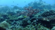 Seychellen, Praslin, Booby Rock