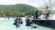 Seychellen, Praslin, Whitetip Divers