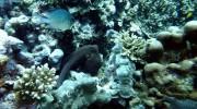 Tauchen auf Mahé-Nord mit Ocean Dream Divers