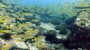 Seychellen, Schnorcheln und Tauchen