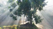 La Digue Seychellen Morgenerwachen