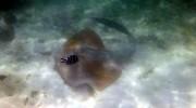 Ste Anne Marine National Park Mahé Seychellen