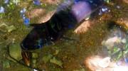 Fond Ferdinand Nature Reserve Praslin Seychellen
